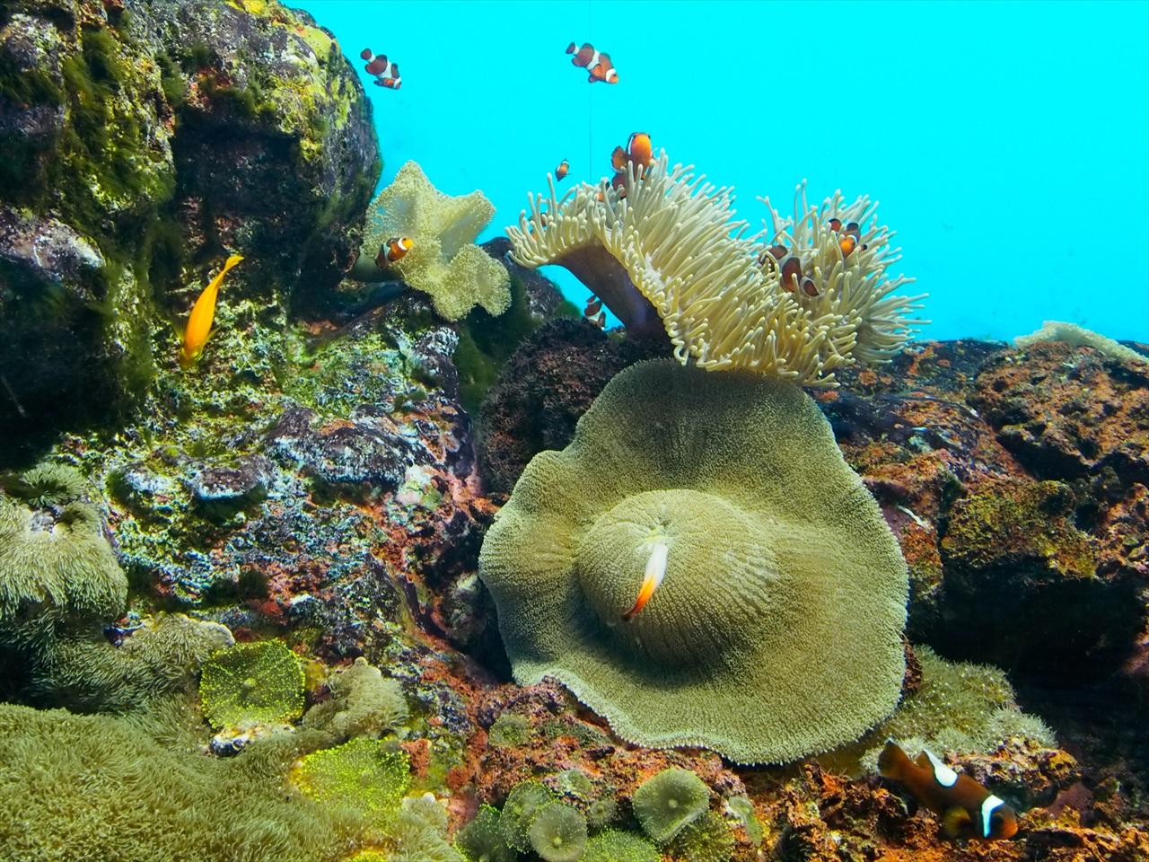 サンゴやヒトデ