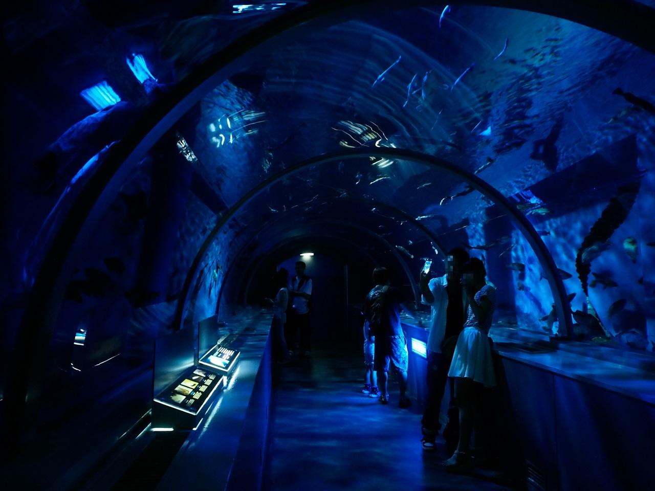 アクアトンネル1