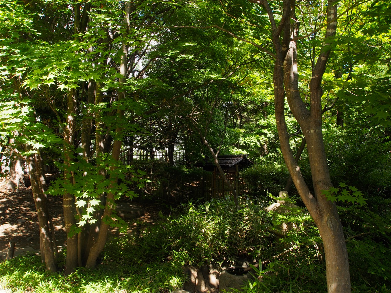 日本庭園らしい景観1