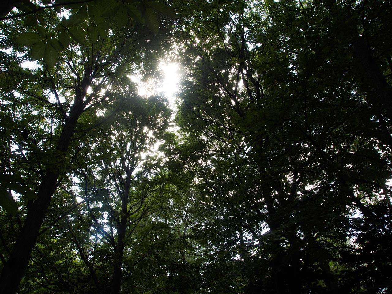 中島公園の木漏れ日