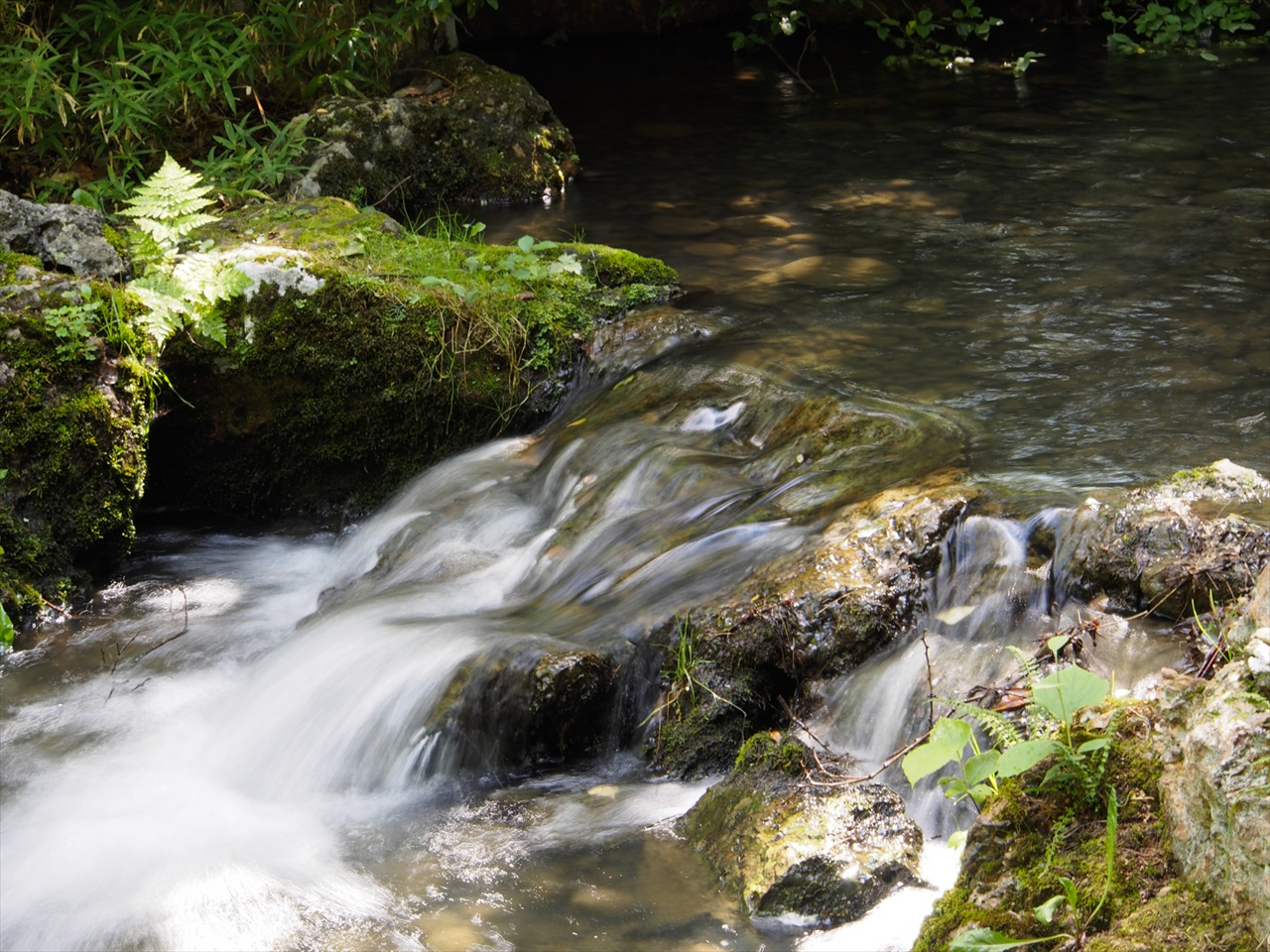 日本庭園の池の流水
