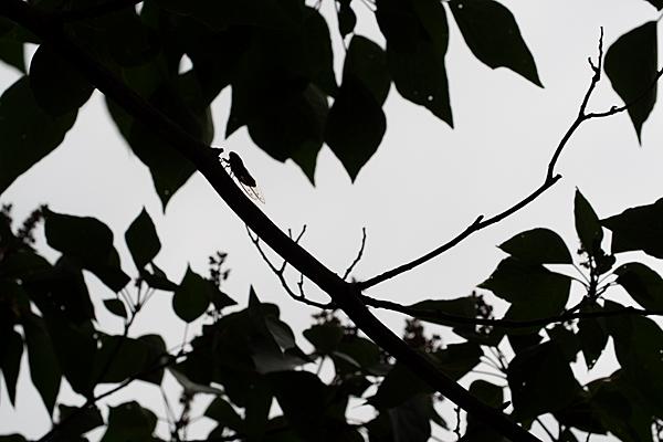 森林公園-4