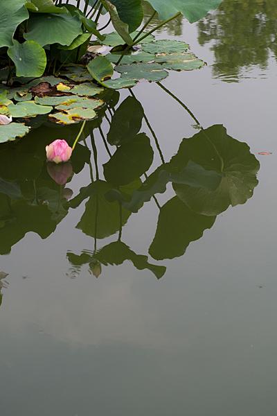 東山植物園-5