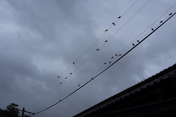 長良川鉄道6-2