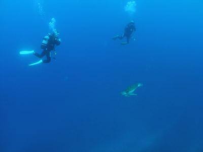 半日ダイビング