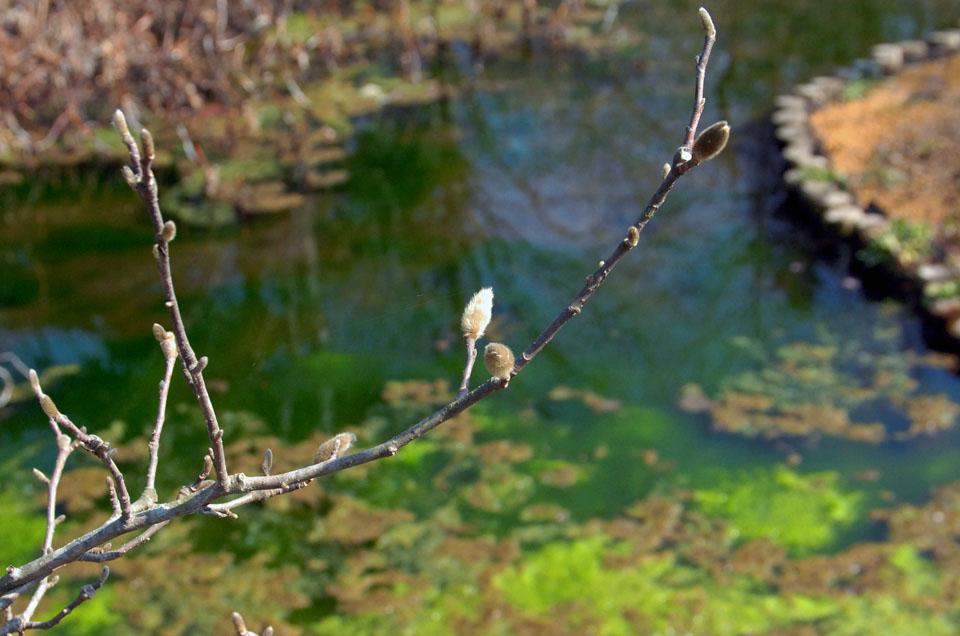 DSC_2002植物園