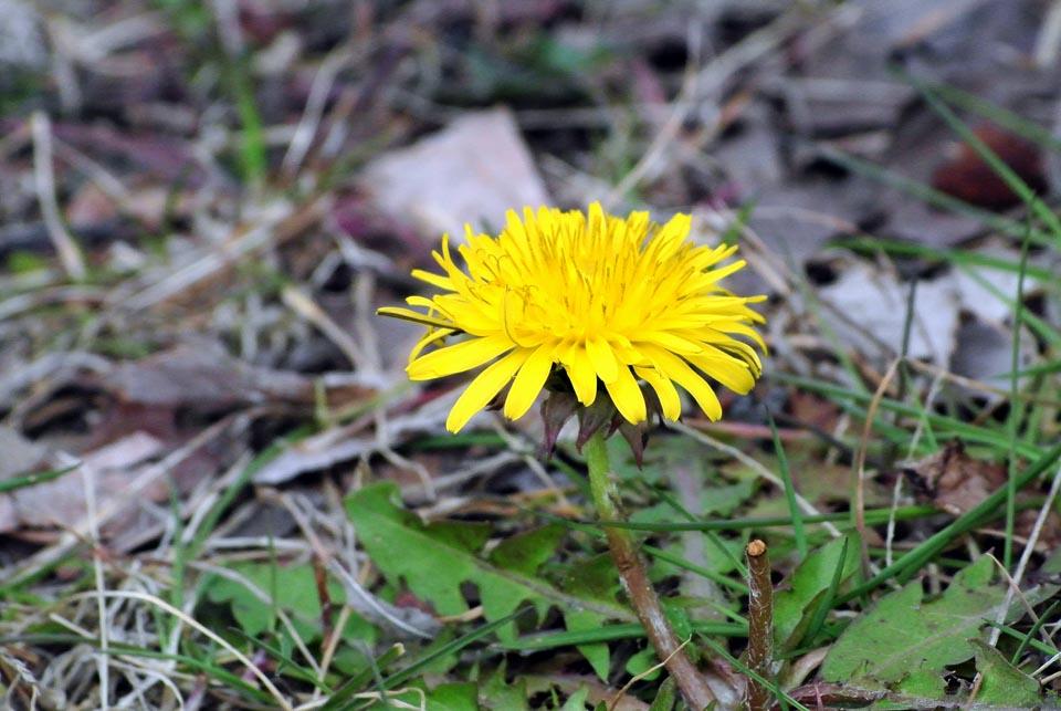 DSC_0567春の花