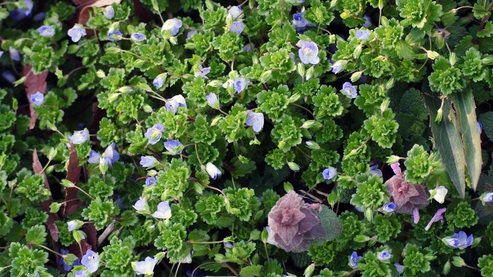 DSC_0499春の花