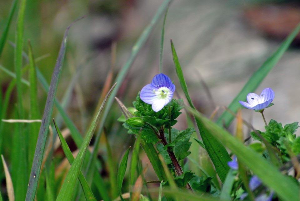 DSC_0575春の花