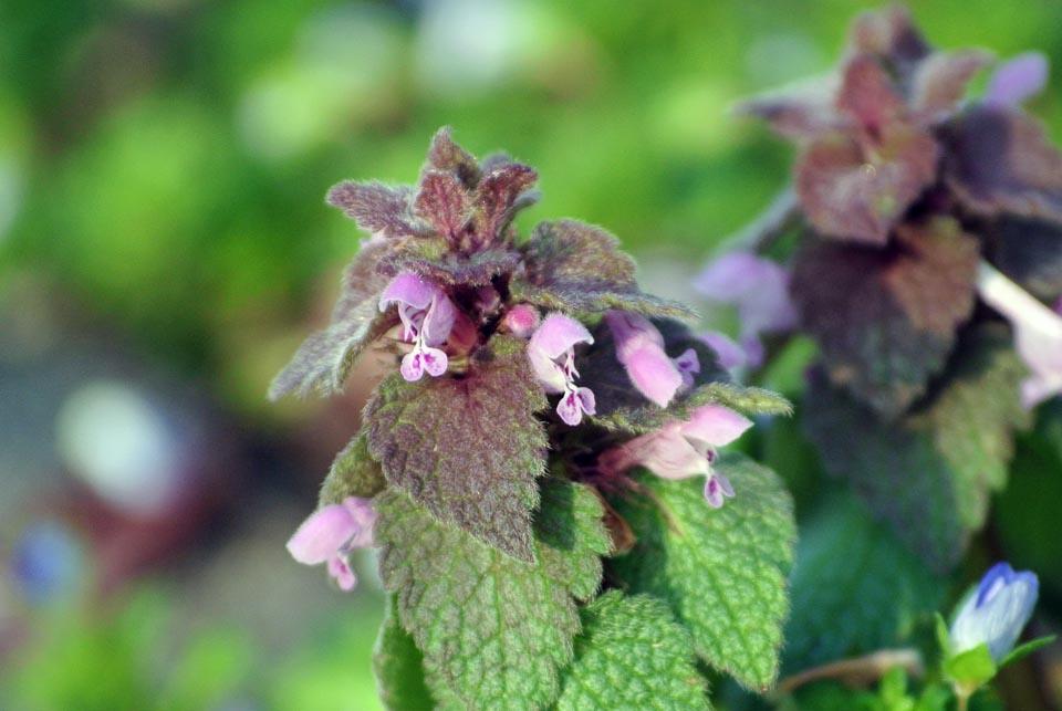DSC_0511春の花