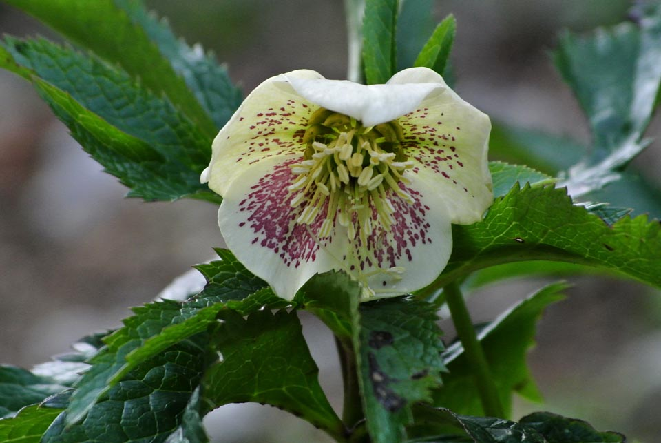 DSC_0522春の花