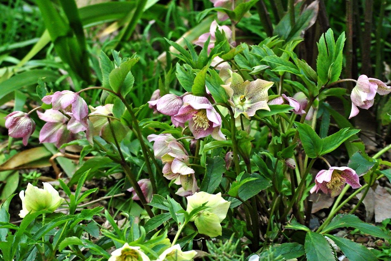 DSC_0555春の花