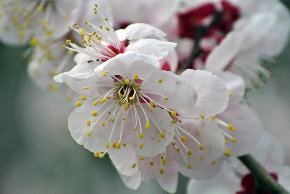 DSC_0602春の花