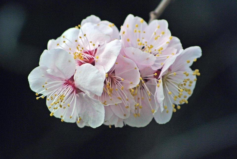 DSC_0531春の花