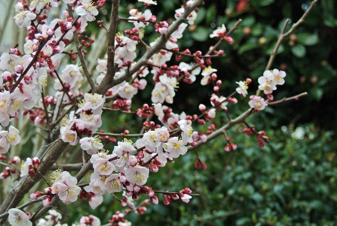 DSC_0486春の花