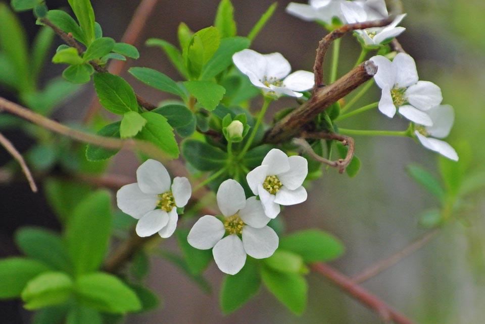DSC_0598春の花