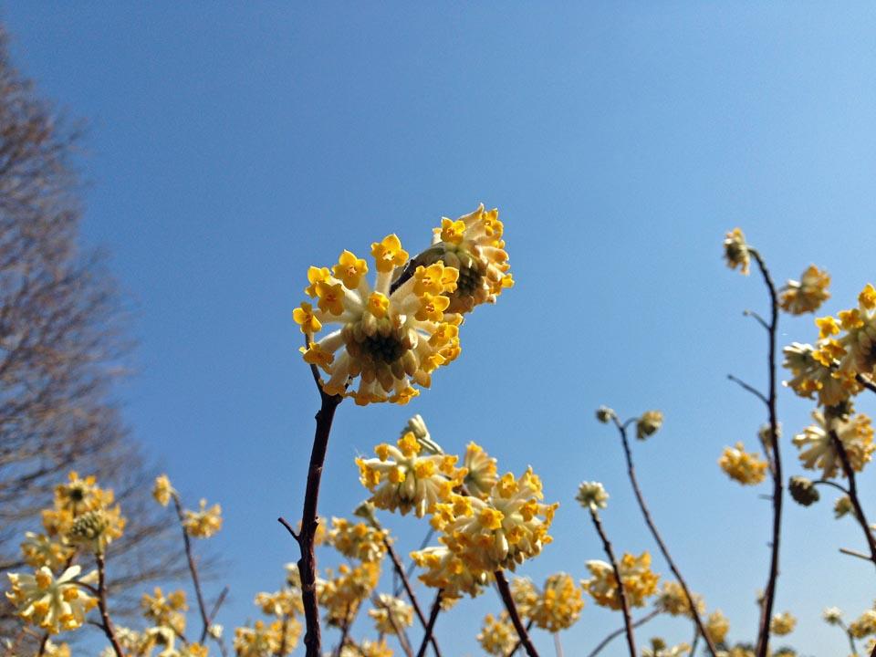 IMG_1213春の花