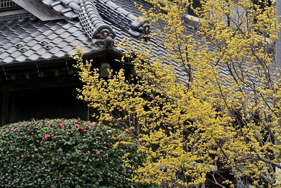 DSC_0667春の花