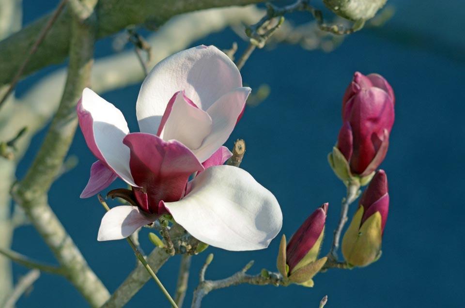 D70_4563春の花