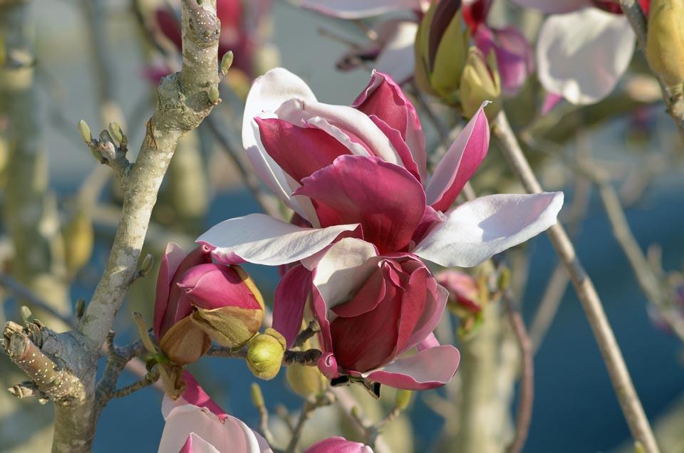 D70_4573春の花