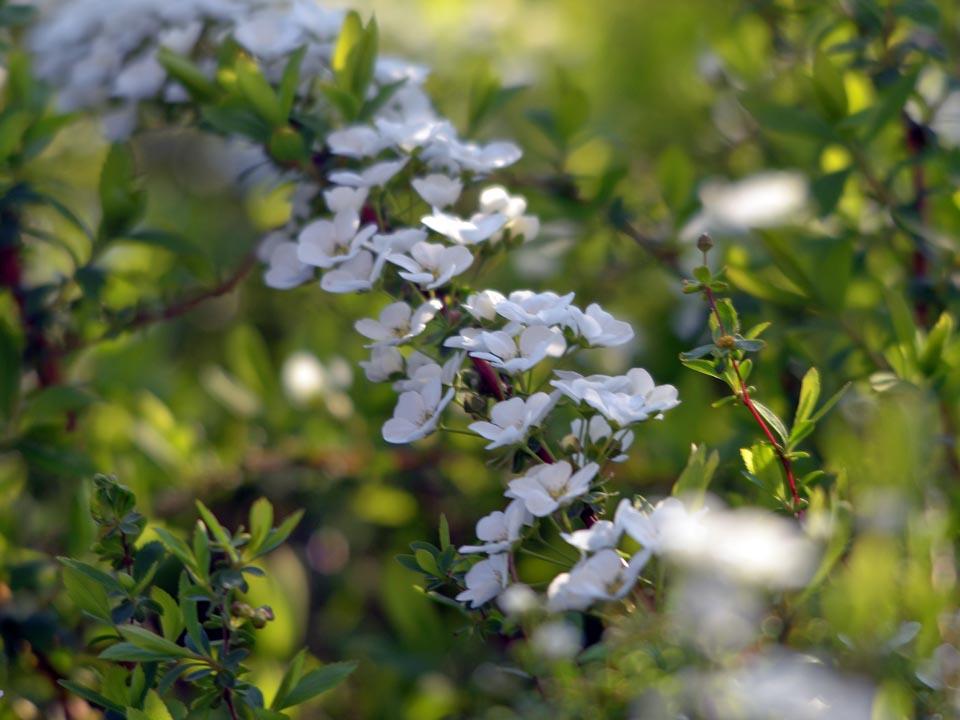 D70_4579春の花