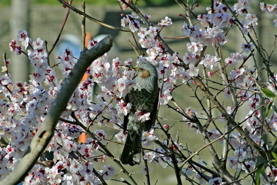 DSC_0654春の花