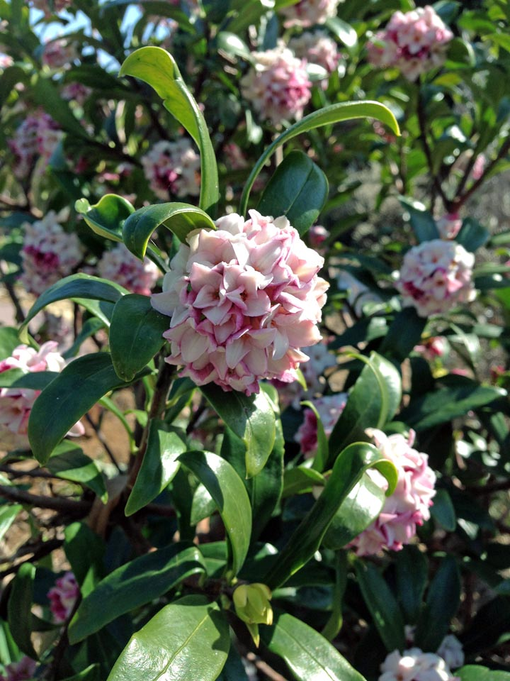IMG_1208春の花