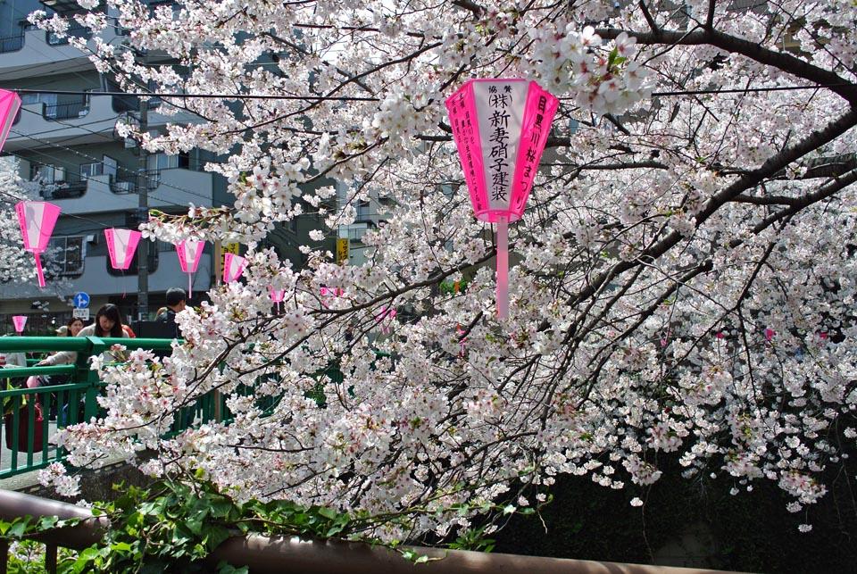 DSC_0953目黒の桜