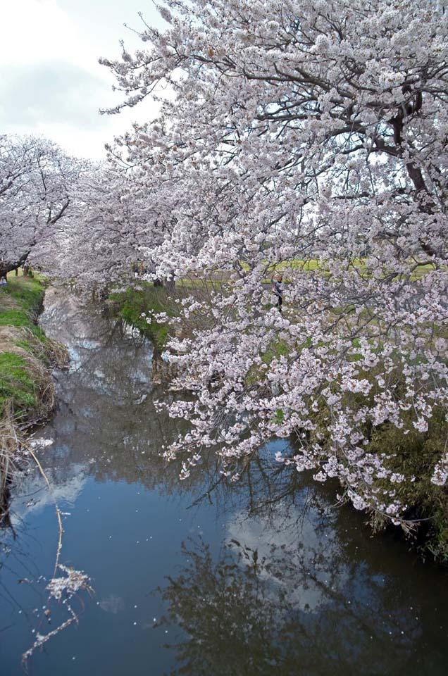 D70_4976今井の桜