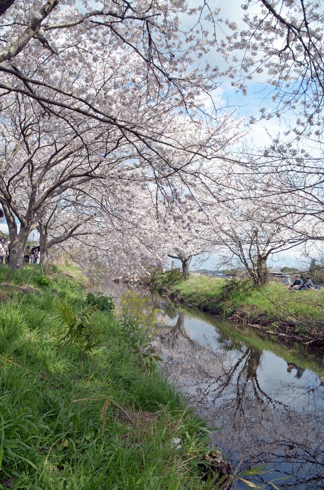 D70_5010今井の桜