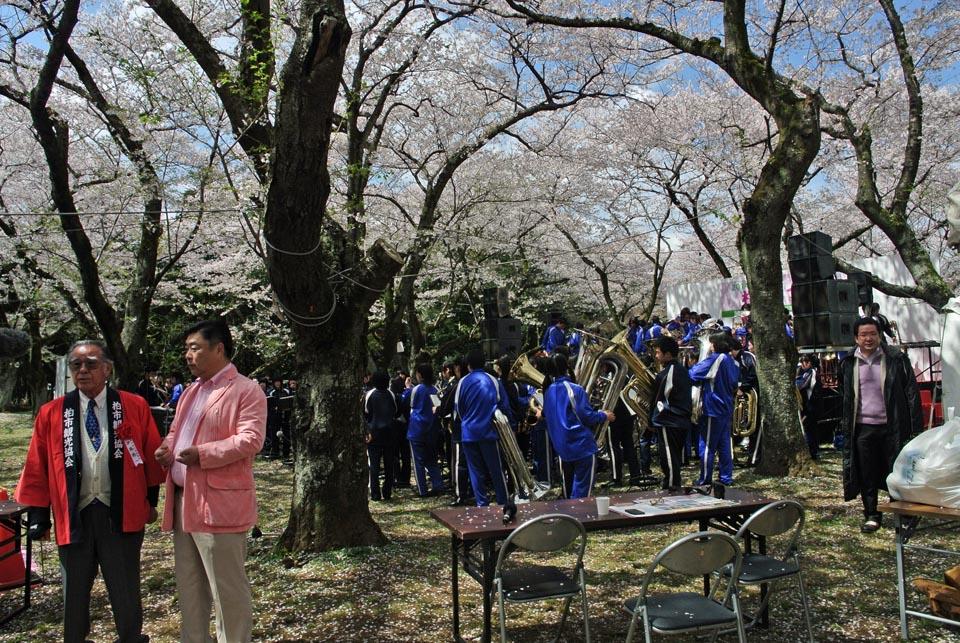 DSC_1004柏の桜