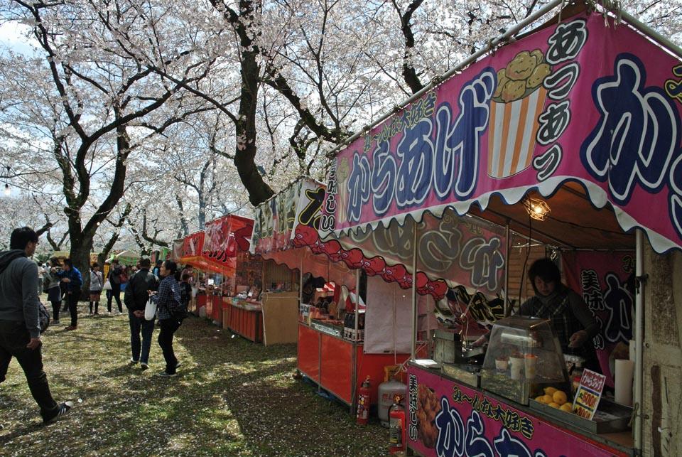 DSC_1011柏の桜