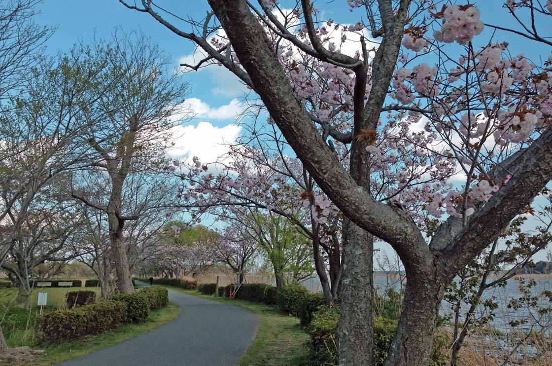 D70_IMG_1331手賀沼の春