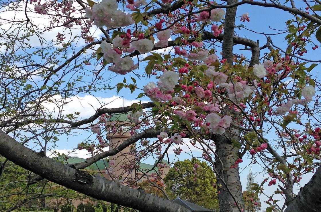 D70_IMG_1330手賀沼の春