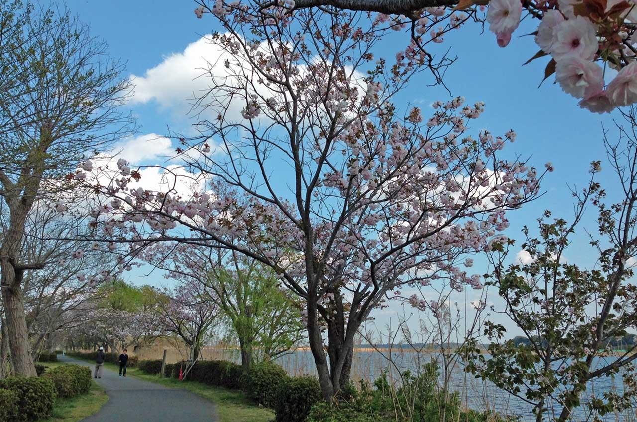 D70_IMG_1333手賀沼の春