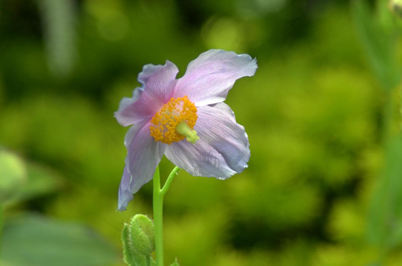 D70_3011湿性花園