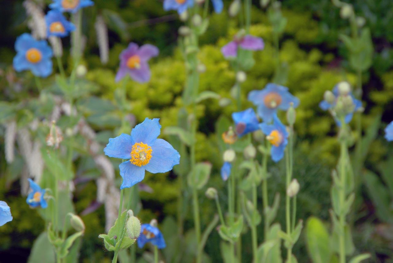 DSC_3053湿性花園