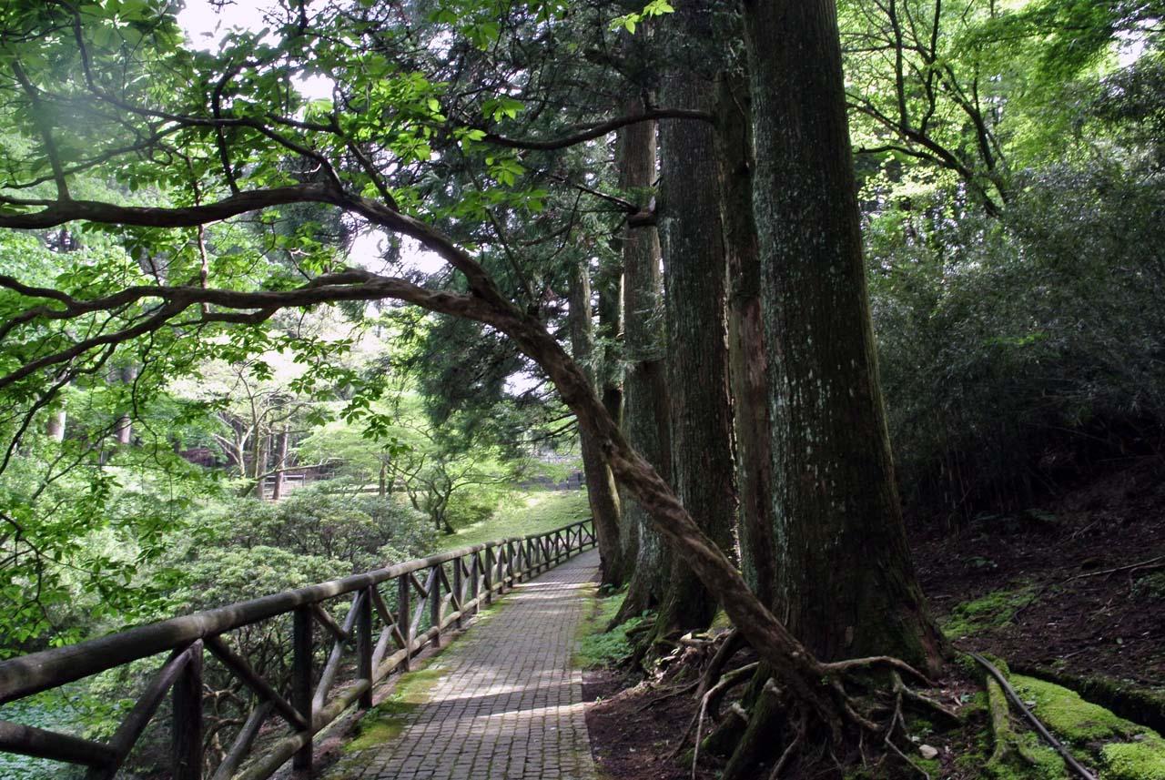 DSC_2091東海道