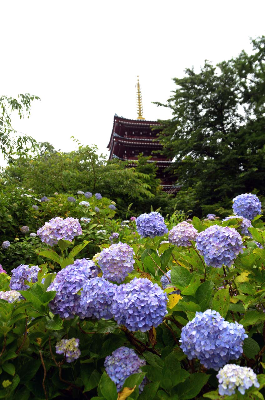 D70_3327本土寺