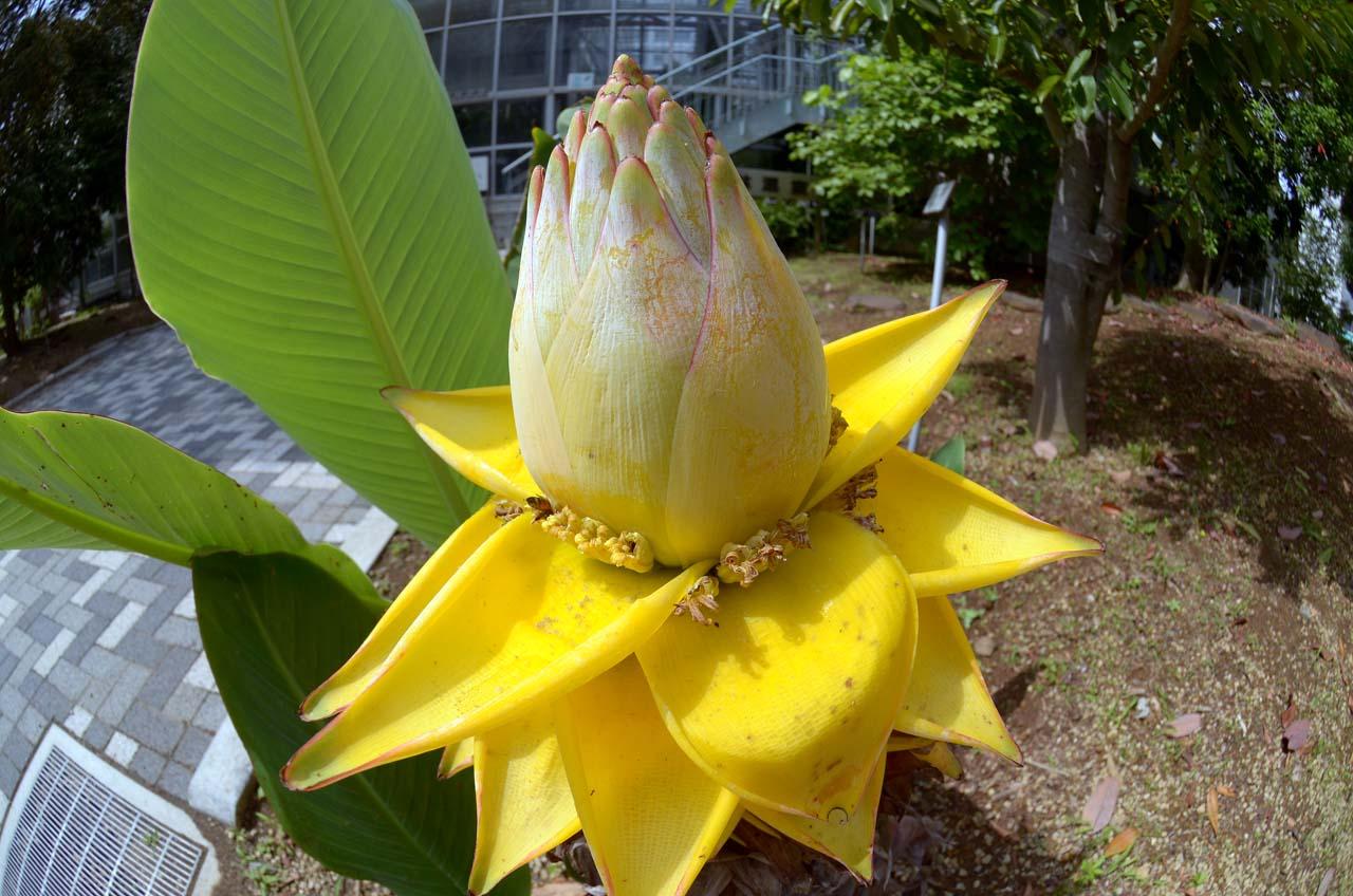 D70_3431植物園