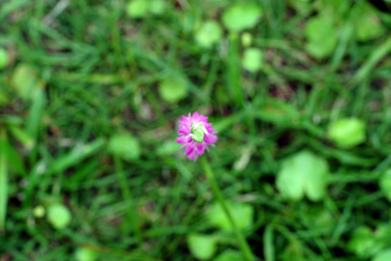 DSC_3392植物園
