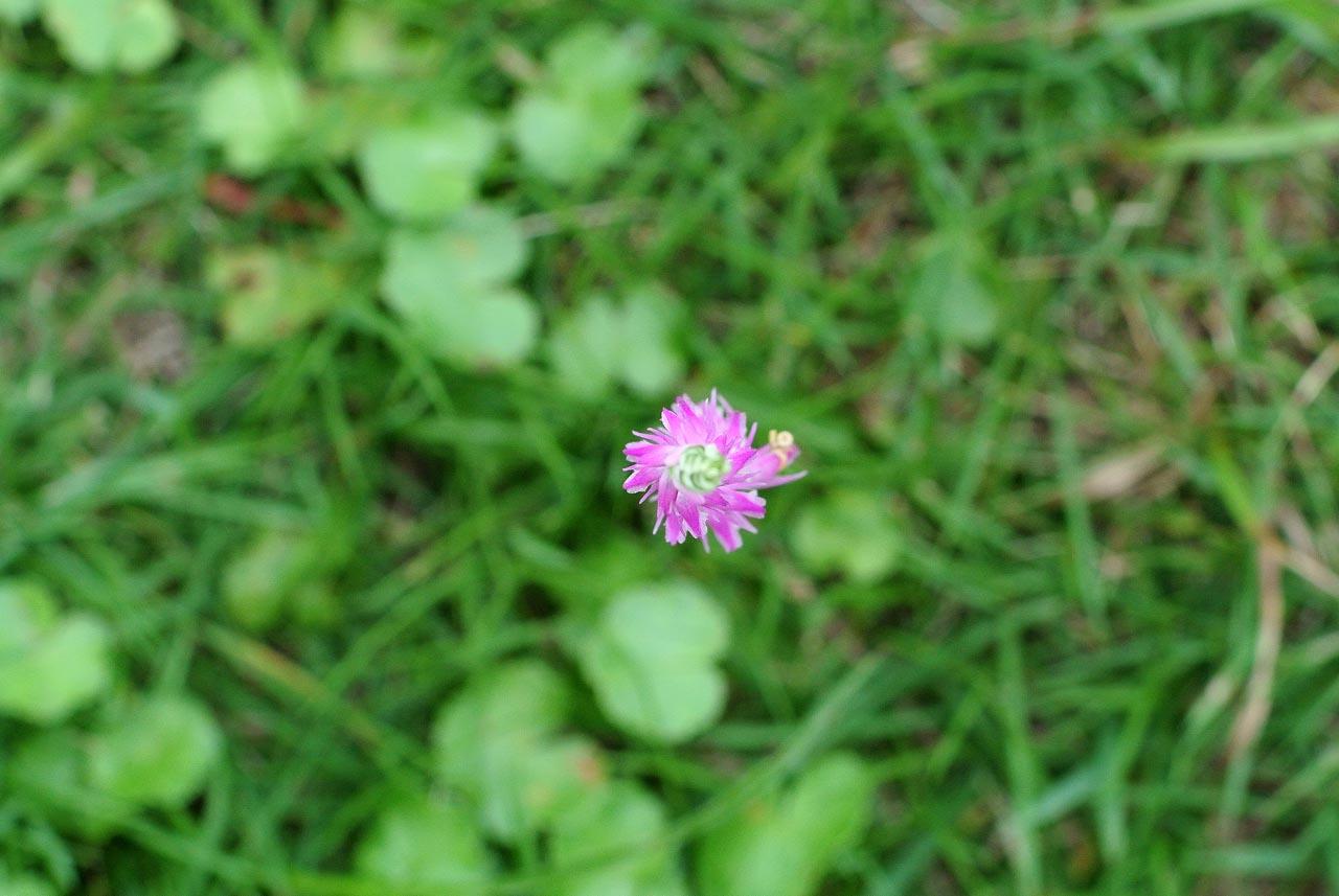 DSC_3394植物園
