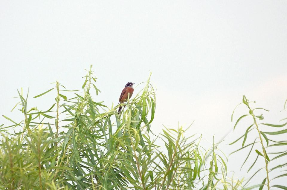 D70_4437探鳥会
