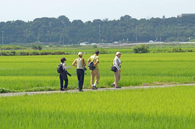 大きく育った稲が美しい