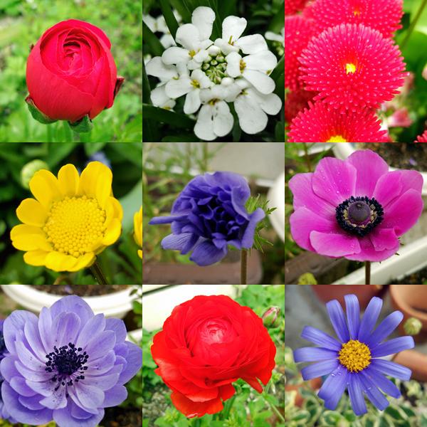 庭の花たち140404