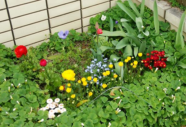 春の庭先14041