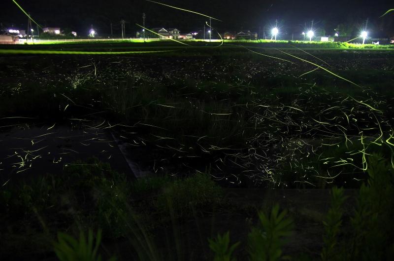 兵庫県三田市 武庫川 ホタル
