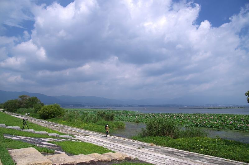 琵琶湖 烏丸半島のハスが満開!
