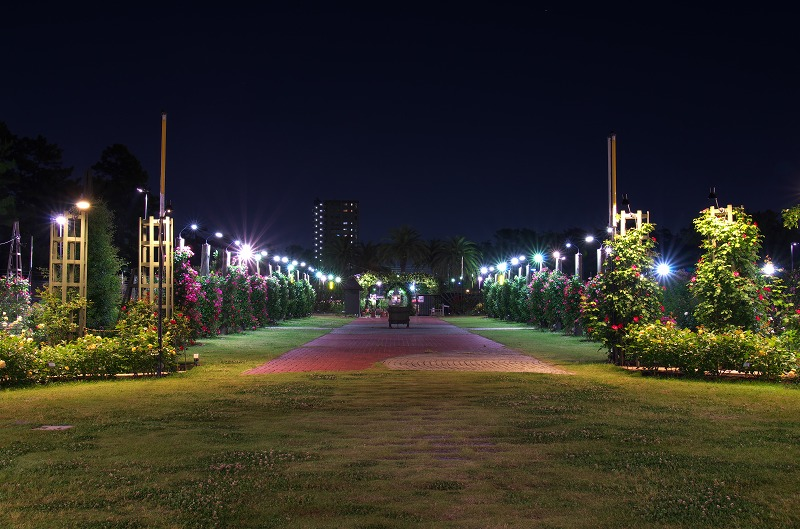浜寺公園ばら庭園 ライトアップ 2014