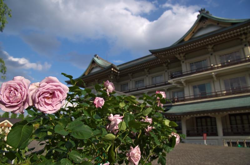 びわ湖大津館 イングリッシュガーデン ローズフェスタ 薔薇 バラ